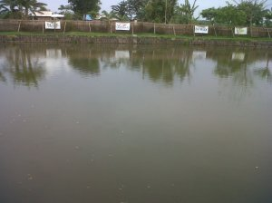 kolam matahari