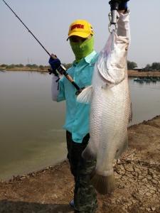 Casting Barramundi Thailand Boonma